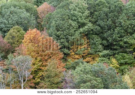 Colorful, Thickly Clustered Trees On Hillside Above Otter Brook Lake