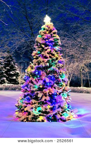 Christmas Tree Outside
