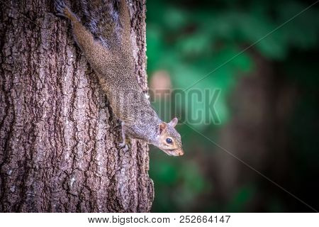 A Squirrel Looking Around In The Wilderness