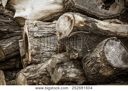 Stumps Tree Background. Cross Section Stumps Tree Background.