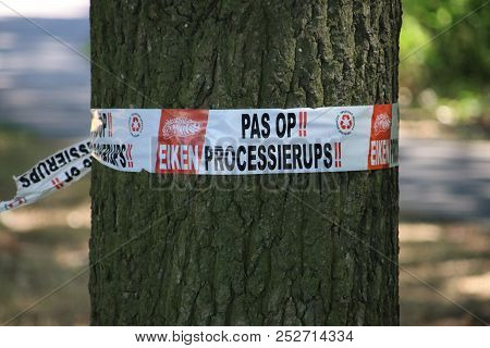 Warning Tape Around A Tree In The Netherlands To Warn For The Oak Processionary Caterpillar