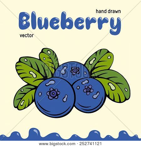 Blueberry Vector Illustration, Berries Images. Doodle Blueberry Vector Illustration In Blue And Gree