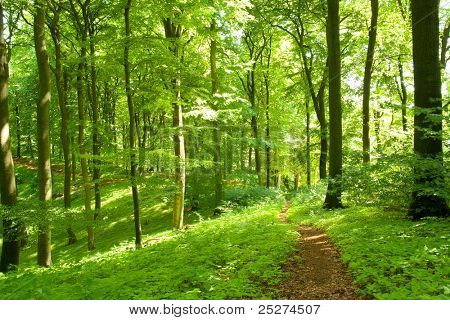 Winding footpath in a green forest