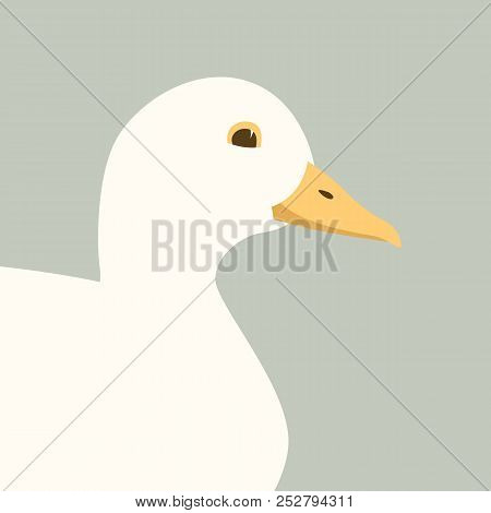 Buff Duck  Vector Illustration  Flat Style  Profile Side