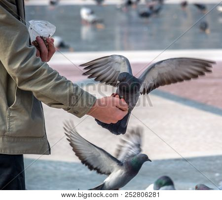 pigeons feed in the city