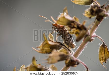 Brown Insect On A Dry, Brown Stump With A Blurred Background.