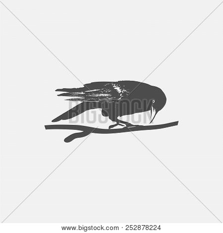 Crow Icon Isolated On White Background. Crow Vector Logo. Flat Design Style. Modern Vector Pictogram