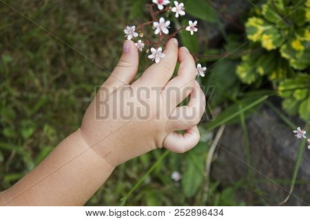 Baby Arm Picking Small White Garden Flowers