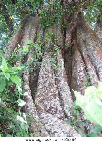 Alter Baum 3