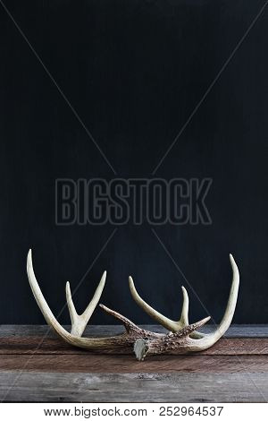 Real White Tail Deer Antlers Over A Rustic Wooden Table Against A Black Background Used By Hunters W