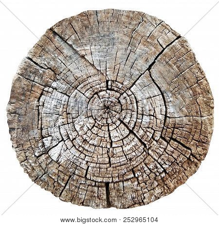 Tree Cut Trunk Isolated On White Background. Natural Round Wooden Textures. Stump With Annual Rings