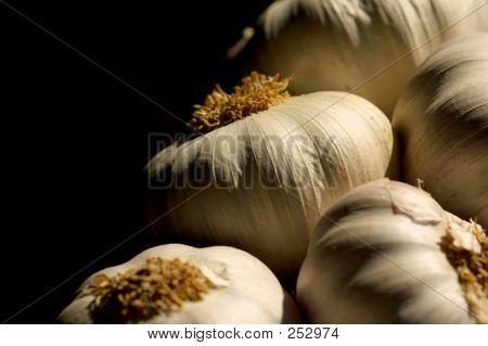 Garlic_0015_filtered
