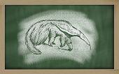 myrmecophaga tridactyla sketched with chalk on blackboard poster