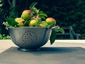 Fresh ripe apples in  in the metal mesh percolate pot on the table outdoor. Apple harvest with copy space. Ripe summer vegetables. poster