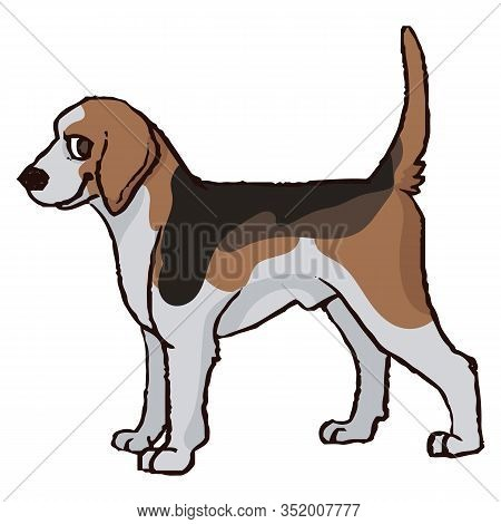 Cute Cartoon Foxhound Hunting Dog Vector Clipart. Pedigree Kennel Doggie Breed For Dog Lovers. Pureb
