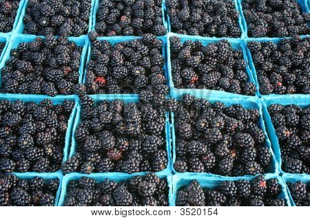 Blackberries, Freshly Picked