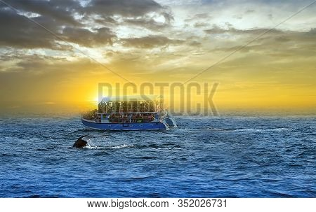 Blue Whale Tourist Yacht Passengers Boat Whales Watching Trip In Mirissa Holiday In Sri Lanka. Backg