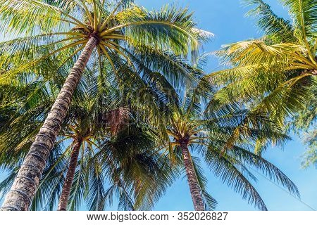 Coconut Tree Cocos Palm Background Coco Silhouette
