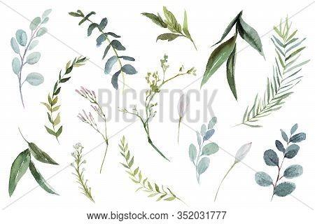 Watercolour Floral Illustration Set. Diy Flower Elements Collection - Perfect For Flower Bouquets, W