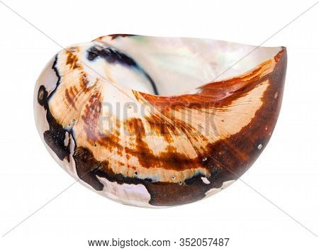 Empty Shell Of Nautilus Mollusc Isolated On White Background