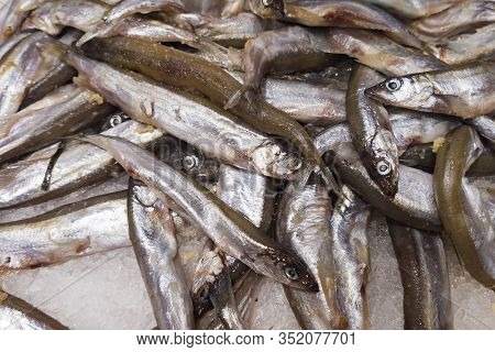 A Lot Of Small Capelin Fish Lies On A Counter In The Ice