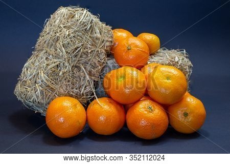 Fresh Tangerines From The Market, Decorated With Hay Bales