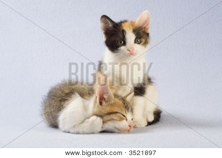 Two Kittens, Isolated On A Blue