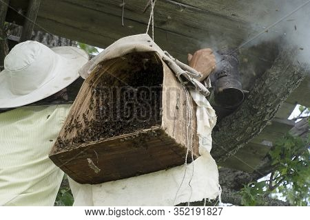 A Beekeeper Smokes Bees With Smoke For Safety. Birch Bark Basket For Bees. Insects Swarm In A Basket