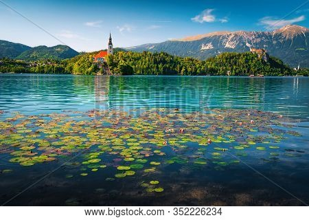 Admirable Pink Lotus Flowers Blossom On The Lake. Magical Water Lily Flowers And Pilgrimage Church O