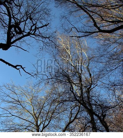 A View From A Tree Tops Of Several Beech And Oak Trees In The Sababurg Primeval Forest On A Sunny Da