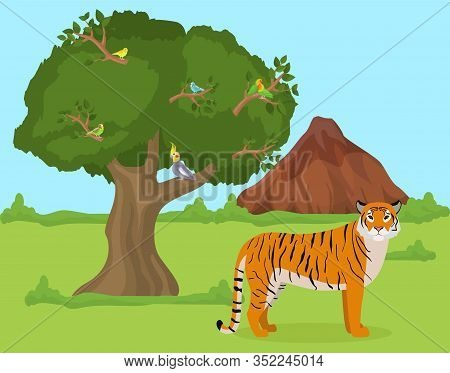 Tiger Outdoors In Nature Habitat Vector Illustration. Wild Animal Tiger Predator Stands On Grass In