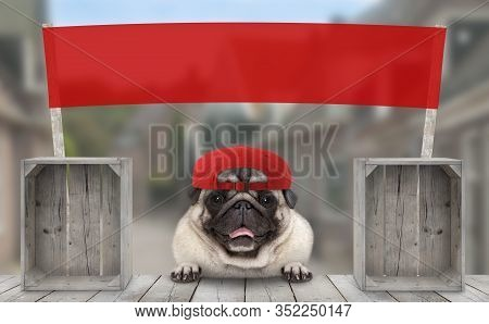 Frolic Smiling Merchant Pug Puppy Dog With Hat And Blank Red Promotional  Banner Sign, Selling At St