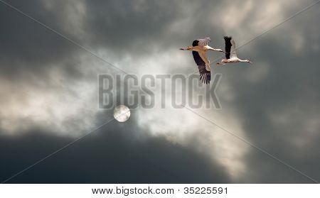 Storks flying in deteriorating weather in summer poster
