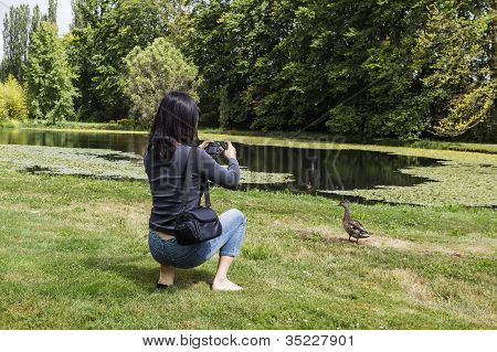 Asian lady taking photo of mallard duck with pond and trees in background poster
