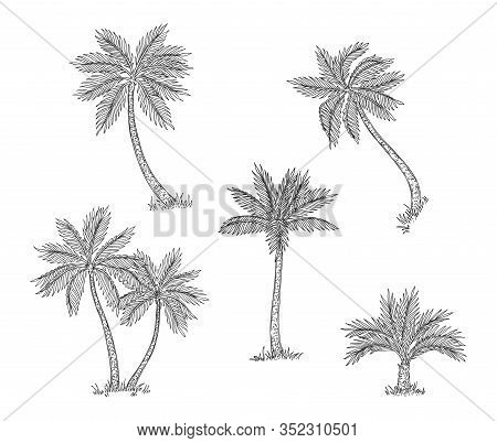 Palm Trees Sketch. Isolated Exotic Rainforest, Coconut Tree. Coast Or Beach Hand Drawn Flora, Black