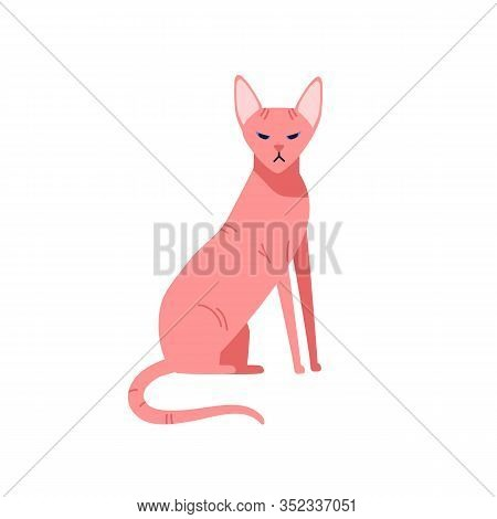 Hairless Cat Canadian Sphinx Breed Isolated On White Background. Nude Colored Pet Sphynx Sitting Vec