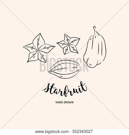 Starfruit Graphic Drawing Exotic Fruit. Sketch Of Carambola Fruit On A White Background. Vector Star