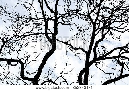 Silhouette Dead Tree On White Sky And Clouds Background For Death And Peace. Halloween Day Backgroun