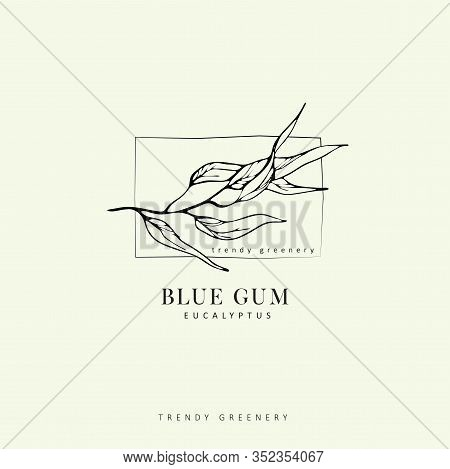 Eucalyptus Blue Gum Logo And Branch. Hand Drawn Wedding Herb, Plant And Monogram With Elegant Leaves