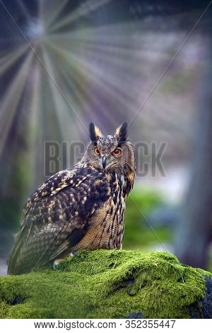 Eurasian Eagle-owl (bubo Bubo), Portrait In The Forest. Eagle-owl Sitting In A Forest On A Rock.big