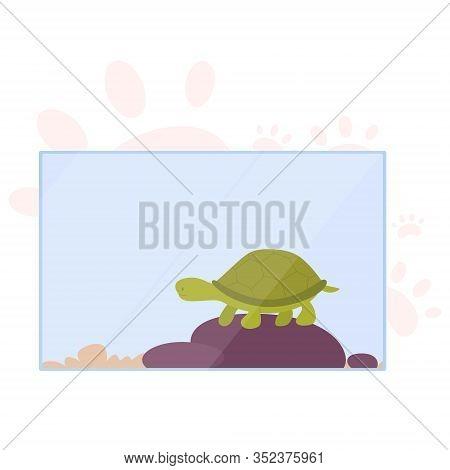 Little Cute Turtoise In Terrarium. Animal With Carapace.