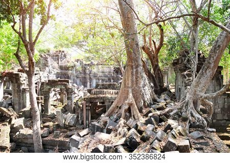 Giant trees on ruin of Koh Ker complex, Cambodia. UNESCO world heritage site