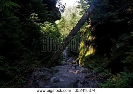 Overthrown Tree In The Wild Hell Trail In Saxon Switzerland, Germany