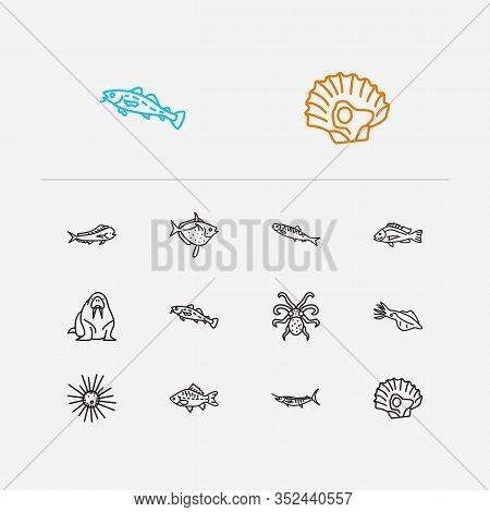 Aquatic Icons Set. Cod Fish And Aquatic Icons With Squid, Marlin And Aquatic. Set Of Tuna For Web Ap
