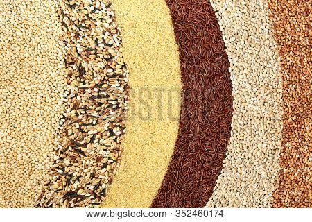 Healthy food with super grains for good health with quinoa, multi grains, bulgur wheat, red rice, pearl barley & buckwheat. Left to right. High in fibre, antioxidants, protein, minerals & vitamins.