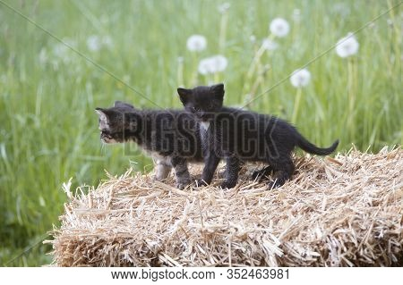 Two Young Kitten Sitting On A Bale Of Hay