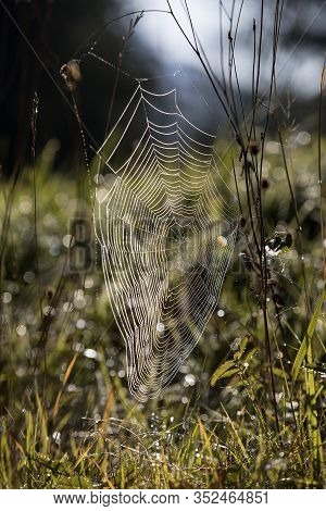 Spider Web Outdoors In An Autumnal Light