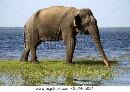 Young Elephant On A Safari In A National Park