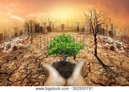Human Hands Holding Big Growth Plant. Global Warming And Human Waste ,pollution Concept - Sustainabi