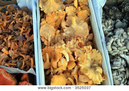 Mushrooms, Freshly Harvested